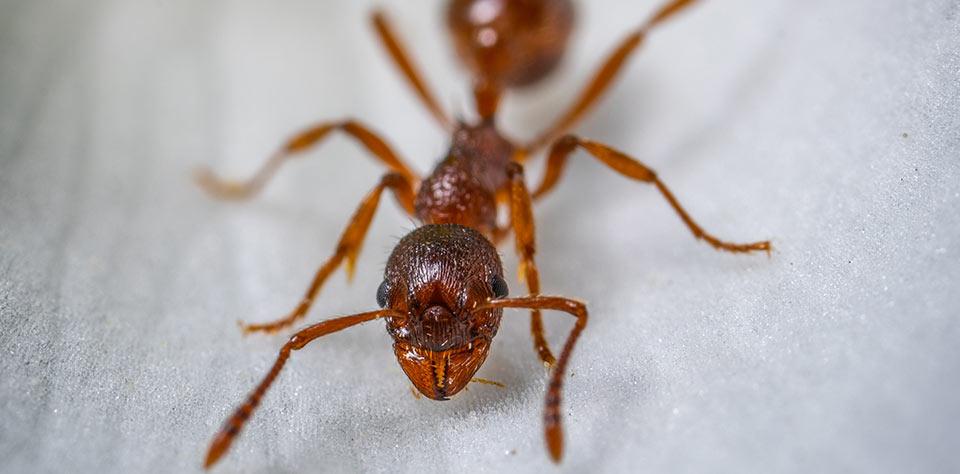 NBS30-ant